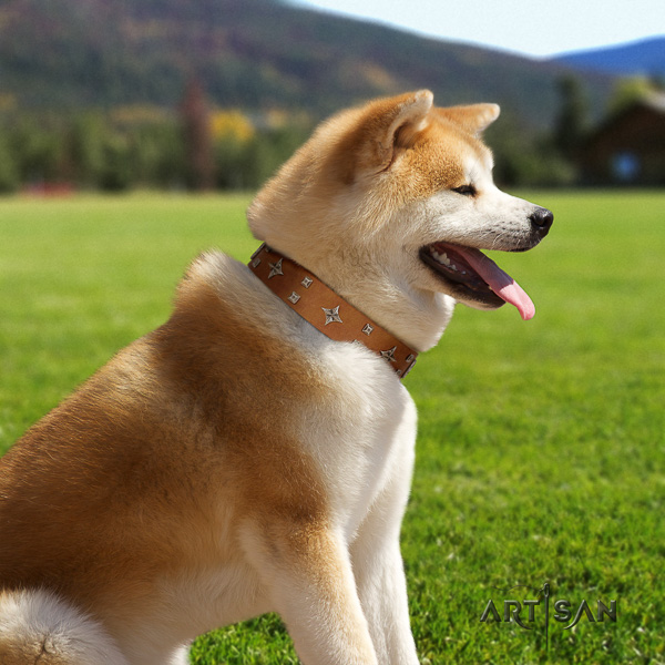 Akita Inu everyday walking natural leather collar with embellishments for your pet