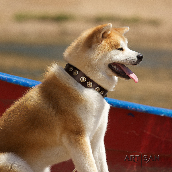Akita Inu stylish walking full grain genuine leather collar with adornments for your pet