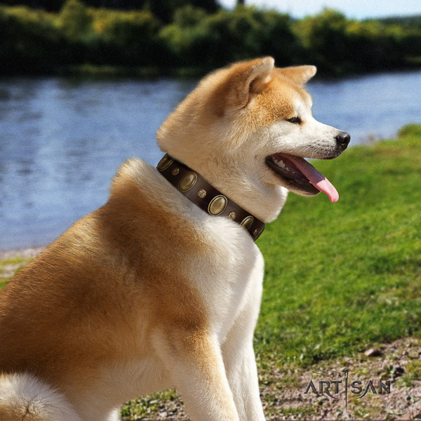 Akita Inu everyday walking genuine leather collar with adornments for your dog