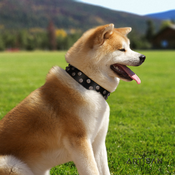Akita Inu walking full grain leather collar with decorations for your dog