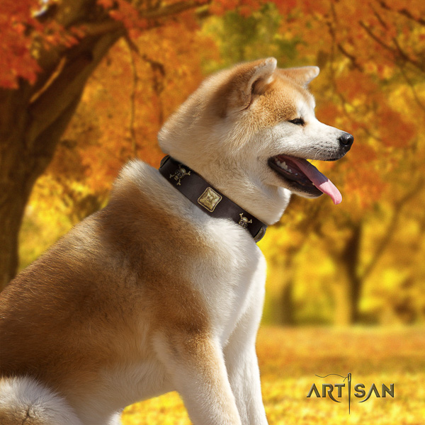 Akita Inu everyday use full grain leather collar with embellishments for your pet