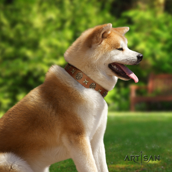 Akita Inu comfortable wearing full grain genuine leather collar with studs for your dog
