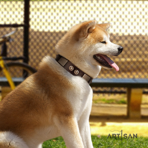Akita Inu comfy wearing natural leather collar with embellishments for your canine