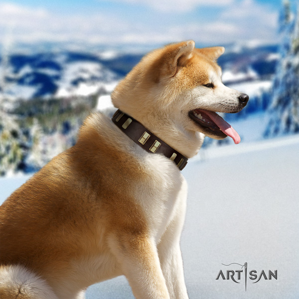 Akita Inu comfy wearing natural leather collar with decorations for your dog