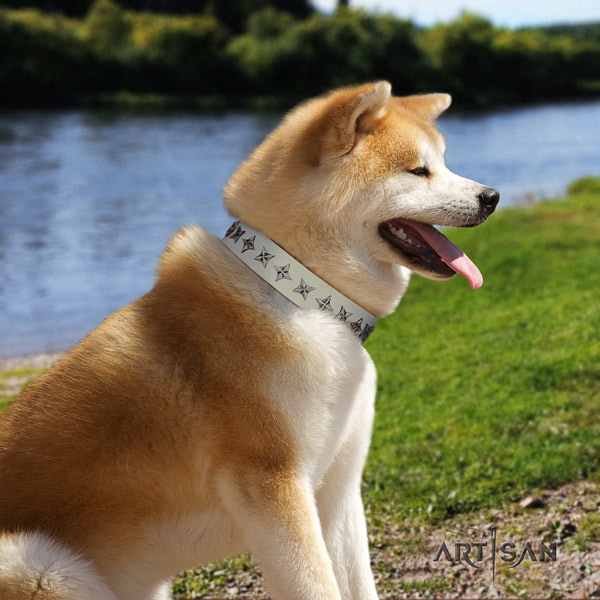 Akita Inu genuine leather dog collar with stylish design adornments