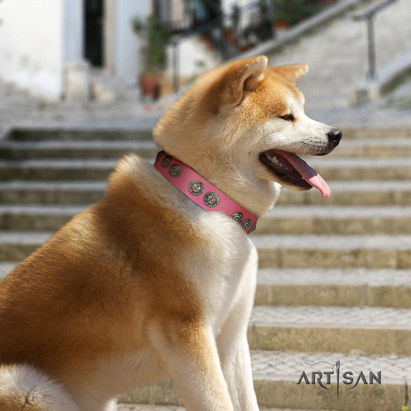 Akita Inu comfortable wearing full grain natural leather collar with embellishments for your doggie