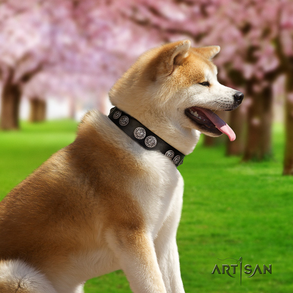 Akita Inu comfortable wearing leather collar with decorations for your canine