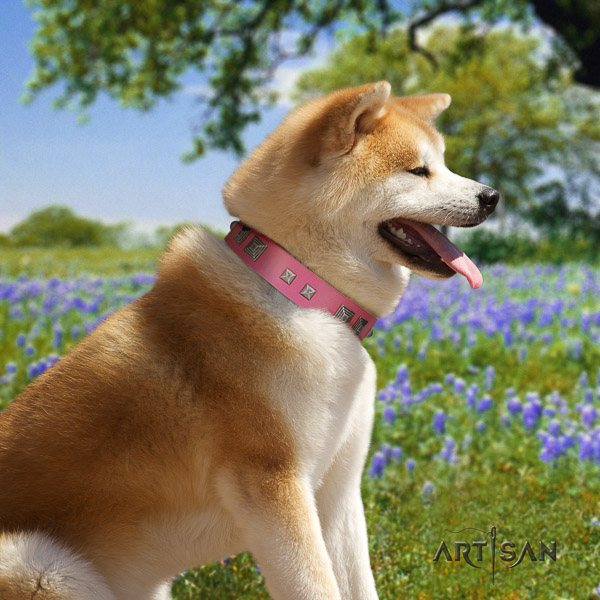 Akita Inu everyday use full grain leather collar with embellishments for your canine