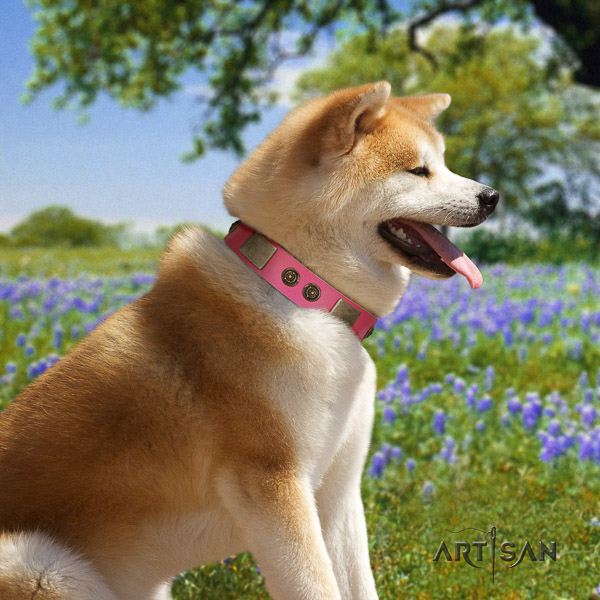 Akita Inu stylish walking natural leather collar with studs for your doggie
