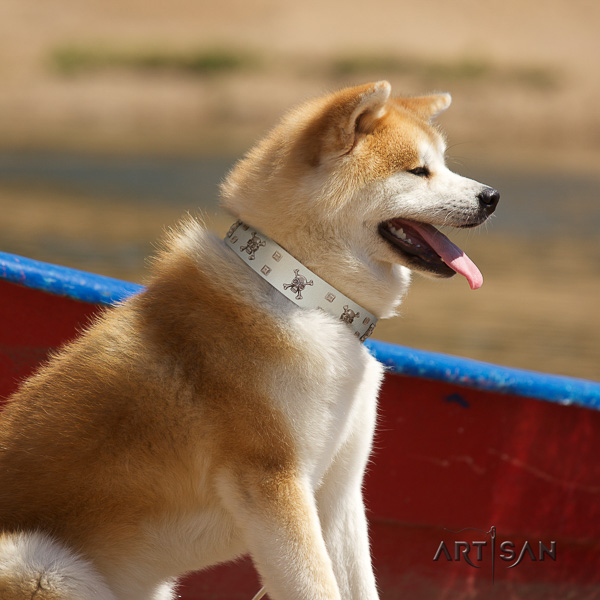 Akita Inu fancy walking leather collar with studs for your four-legged friend