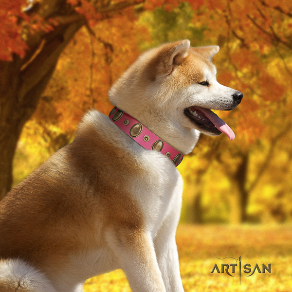 Akita Inu everyday use full grain leather collar with studs for your canine
