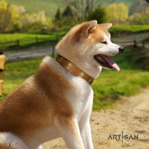 Akita Inu comfy wearing genuine leather collar with studs for your doggie