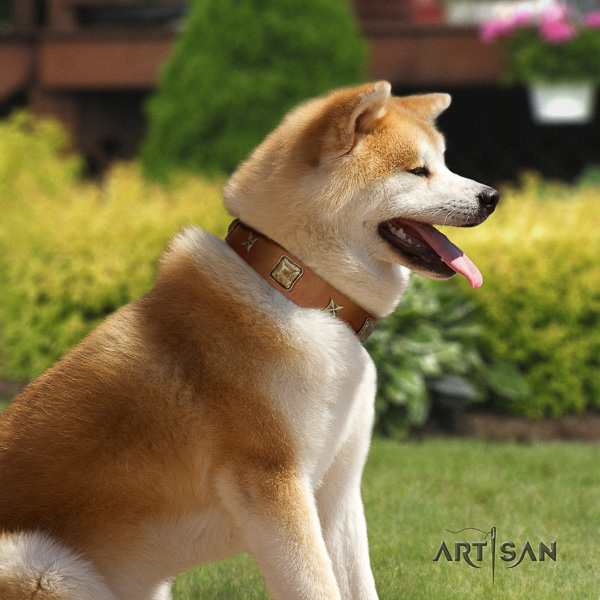 Akita Inu daily use full grain natural leather collar with embellishments for your four-legged friend