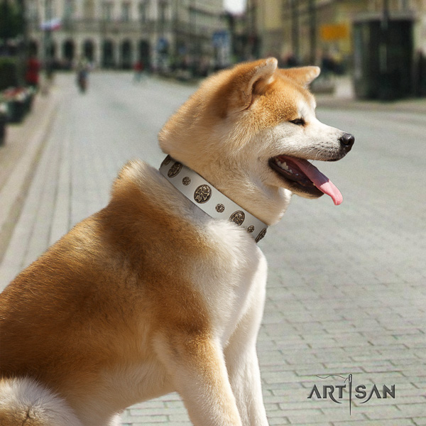 Akita Inu comfy wearing full grain genuine leather collar with adornments for your four-legged friend