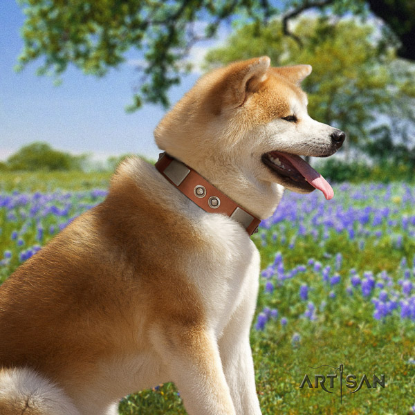 Akita Inu daily use full grain natural leather collar with adornments for your dog