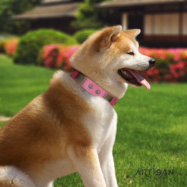 Akita Inu comfortable wearing full grain genuine leather collar with adornments for your four-legged friend