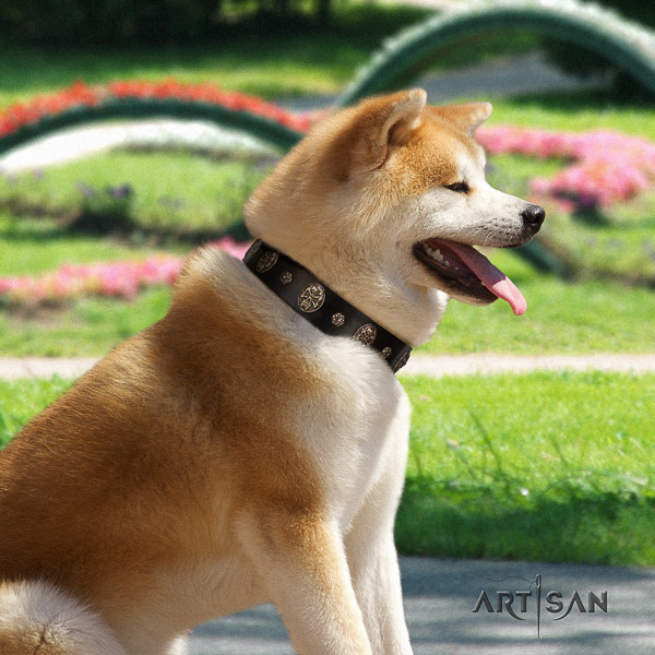 Akita Inu everyday use full grain leather collar with adornments for your pet