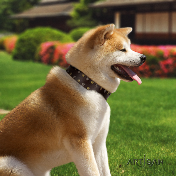 Akita Inu fancy walking genuine leather collar with studs for your pet