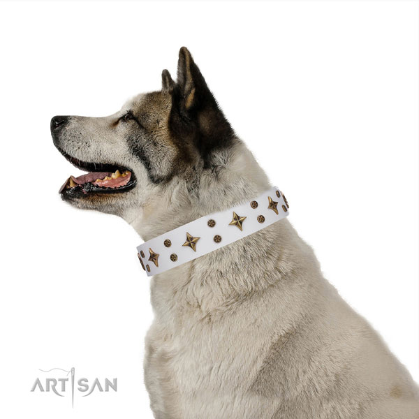 Akita-Inu unusual full grain natural leather dog collar with studs