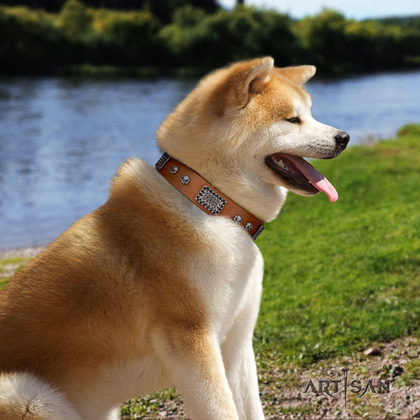 Akita Inu leather dog collar with top notch embellishments