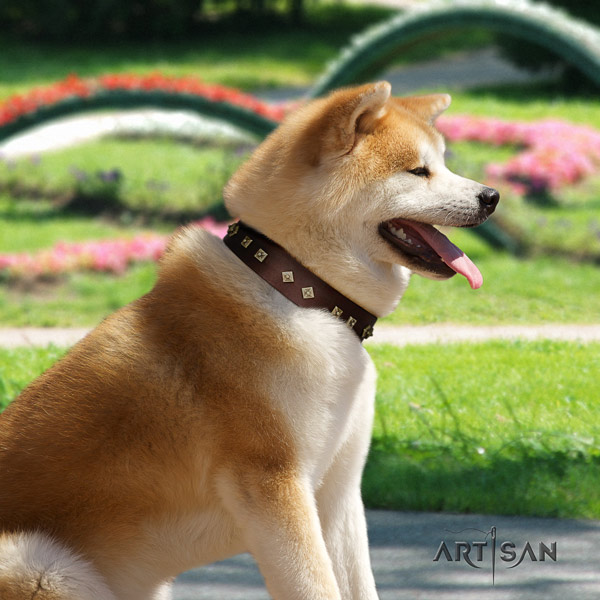 Akita Inu leather dog collar with incredible studs