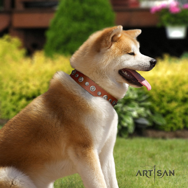 Akita Inu full grain leather dog collar with unique embellishments