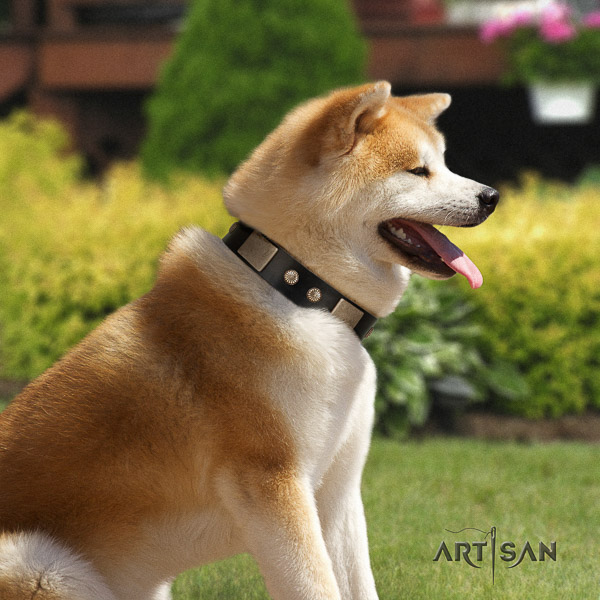 Akita Inu comfortable wearing natural leather collar with studs for your doggie