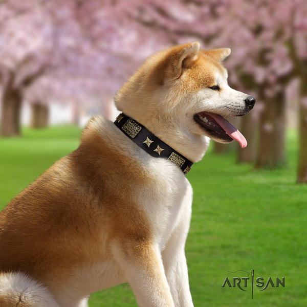 Akita Inu full grain leather dog collar with incredible studs