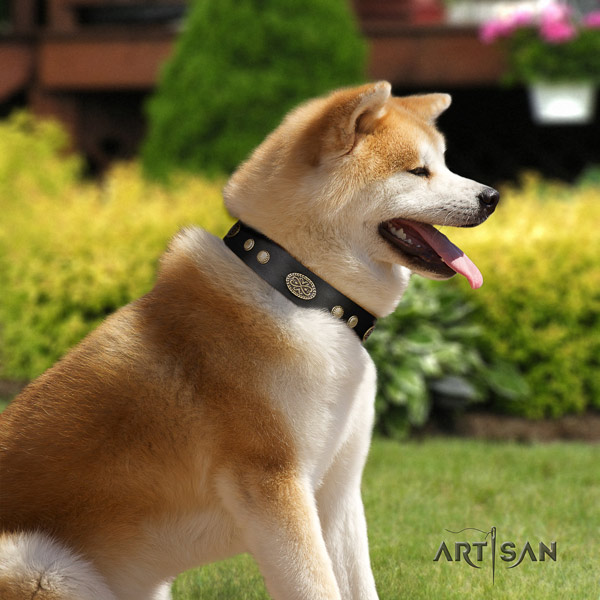 Akita Inu leather dog collar with fashionable decorations