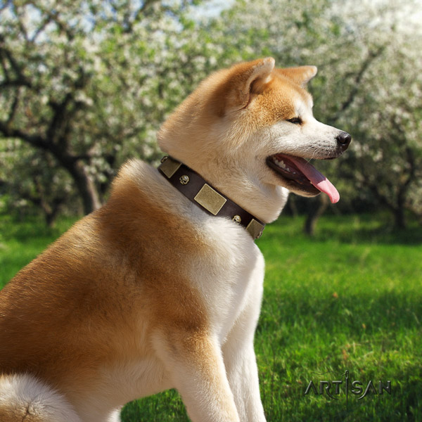 Akita Inu comfortable wearing genuine leather collar with decorations for your dog