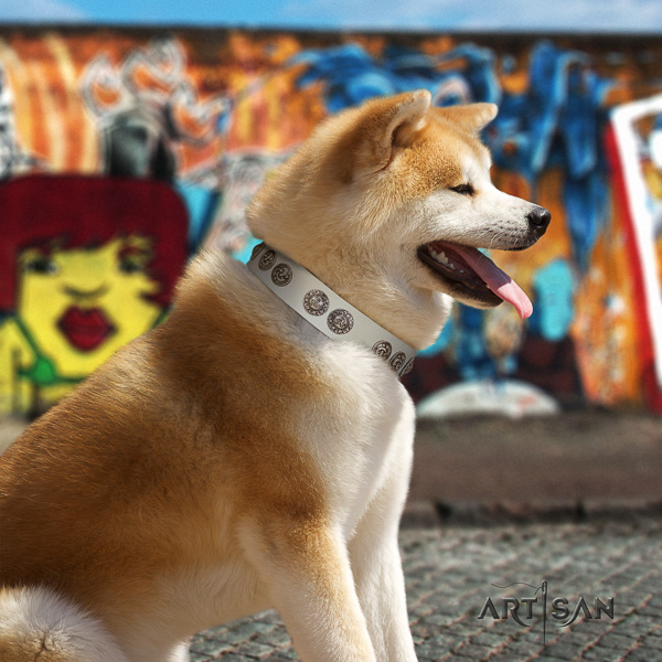 Akita Inu basic training leather collar with adornments for your pet