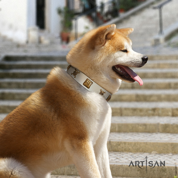 Akita Inu daily use leather collar with studs for your four-legged friend