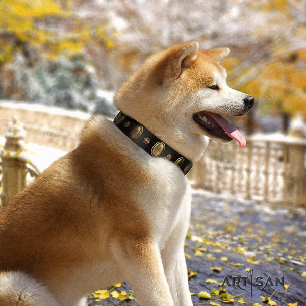 Akita Inu handy use full grain genuine leather collar with embellishments for your canine