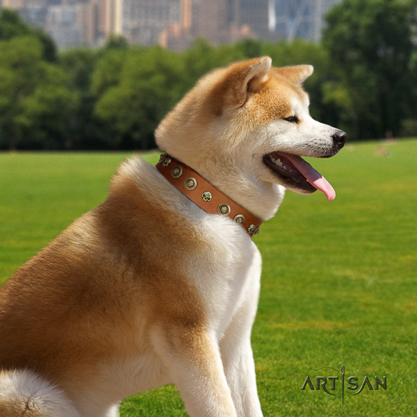 Akita Inu everyday use leather collar with decorations for your four-legged friend