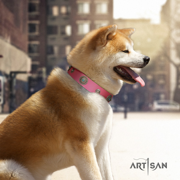 Akita Inu everyday walking full grain leather collar with adornments for your dog