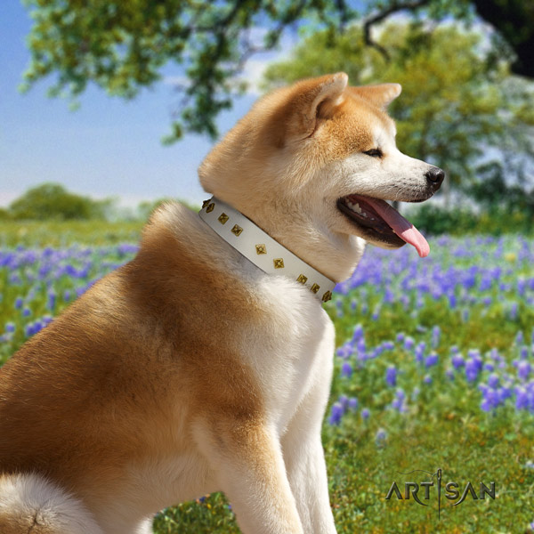 Akita Inu leather dog collar with fashionable adornments