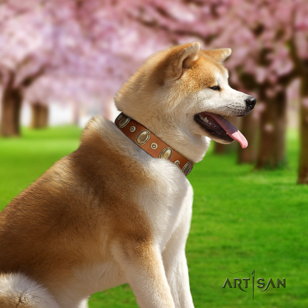 Akita Inu easy wearing leather collar with embellishments for your dog