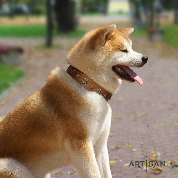 Akita Inu everyday walking natural leather collar with adornments for your pet