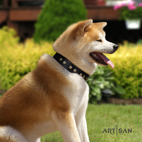 Akita Inu full grain leather dog collar with impressive embellishments