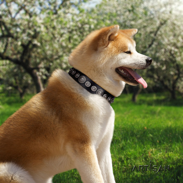 Akita Inu top notch full grain natural leather collar for fancy walking