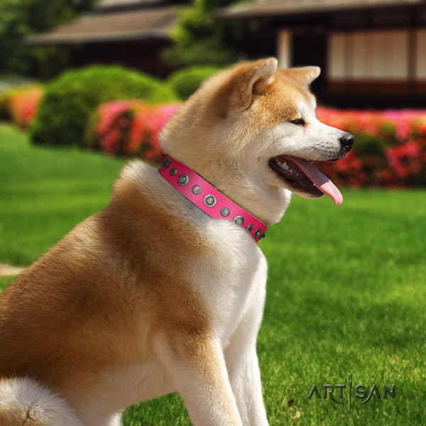 Akita Inu genuine leather dog collar with trendy studs