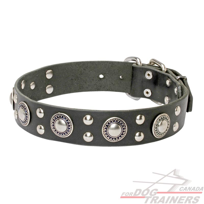 Studded Leather Dog Collar Mixed Decoration