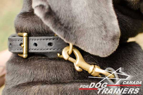 Braided leather dog collar with rust-proof hardware