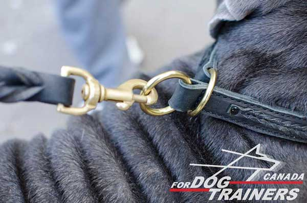 Brass O-rings on Durable Leather Choke Dog Collar