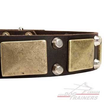 Brass plates nickel cones on leather dog collar