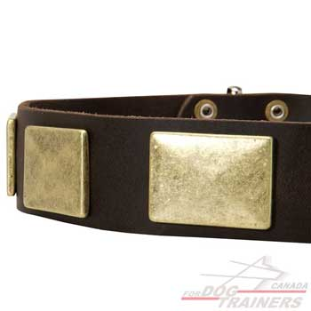 brass plates for dog leather collar