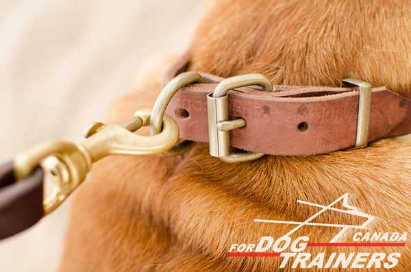 Large Brass Ring for Quick Leash Hook Up