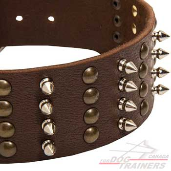Brass studs nickel spikes on leather dog collar