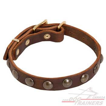 Leather Dog Collar in Brown Color