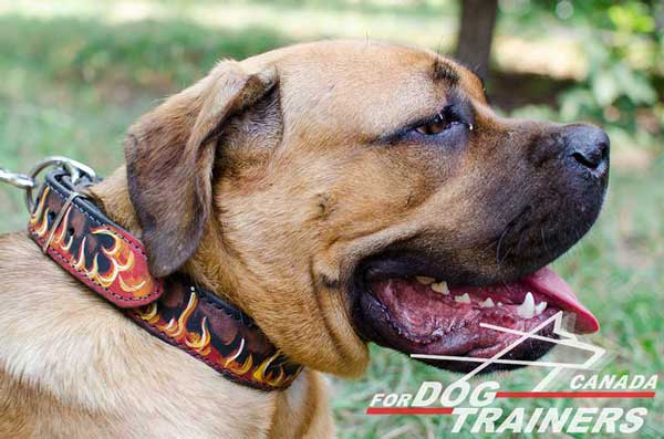 Leather Collar for Cane Corso Dogs